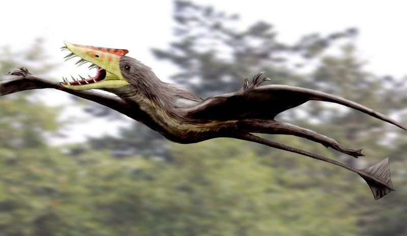 Sericipterus NT