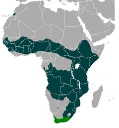 Tierboskat - Wikipedia