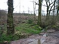 Sheafs Wood, although not much of a wood at the moment - geograph.org.uk - 751185.jpg