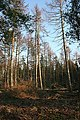 Shirralds Wood - geograph.org.uk - 378359.jpg