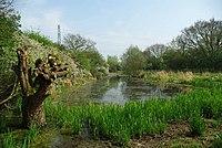 Shotgate Pond - geograph.org.uk - 1253349.jpg