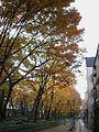 Sideway Baba-Daimon-Keyaki-Namiki autumn.jpg