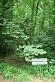 Sign for Forest Halt station, Saltburn-by-the-Sea - geograph.org.uk - 1445187.jpg