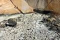 Silt-covered stones in Loddebo.jpg