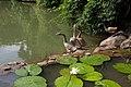 Singapore Botanic Gardens (4043119348).jpg