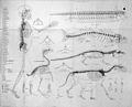 Sir Richard Owen, On the archetype and homologies... Wellcome L0029109.jpg