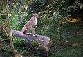 Sitting Pretty (15279823065).jpg