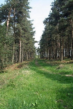 Slaley Forest - geograph.org.uk - 796598