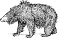 Sloth bear (PSF).png