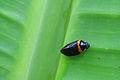 Small creature (2).jpg