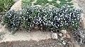 Small garden of Vegetables - Nishapur 6.JPG