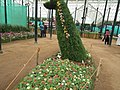 Snap from Lalbagh Flower Show Aug 2013 8156.JPG