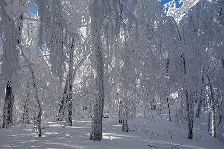 Sninský kameň v zime, námraza na stromoch