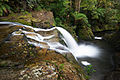 Spout Falls, Liffey, Tasmania.jpg