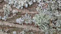 Spring lichens 08.png