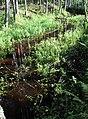 Spulle river (1).jpg