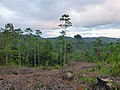 Sri Lanka (Southern Province)-Vegetation (10).jpg
