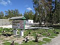 Starr-150328-1880-Albizia lebbeck-sign and Laysan Albatrosses-Midway Mall Sand Island-Midway Atoll (25243696506).jpg