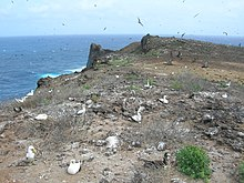 Birds nesting across a flat rocky area near the sea