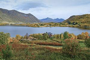 Vestvågøy - Steirapollen in September