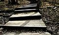 Steps (2306627371).jpg