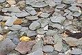 Stones under water - panoramio.jpg