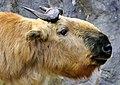 Strange Animal (24277212624).jpg