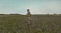 Sugar Beet Field 4815777606 o.jpg