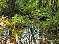 Sumpfgebiet.jpg