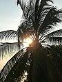 Sun and tree.!.jpg
