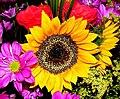 Sunflower from sunny South Africa - Flickr - Lollie-Pop.jpg