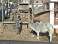 Sur les routes du Sheikawati (Inde) (8427210535).jpg