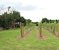 Surlingham village fete 2009 - vineyard tour - geograph.org.uk - 1463655.jpg