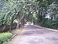 TÚNEL DE ÁRVORES...LINDA FOTO... - panoramio.jpg