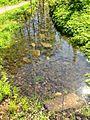 Tīrs ūdens - panoramio.jpg