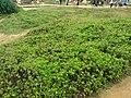 TW 台灣 Taiwan 新台北 New Taipei 萬里區 Wenli District 野柳地質公園 Yehli Geopark August 2019 SSG 121.jpg
