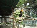 Taman Hewan Pematang Siantar (25).JPG