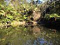 Tamborine Mountain Botanic Gardens 17.JPG