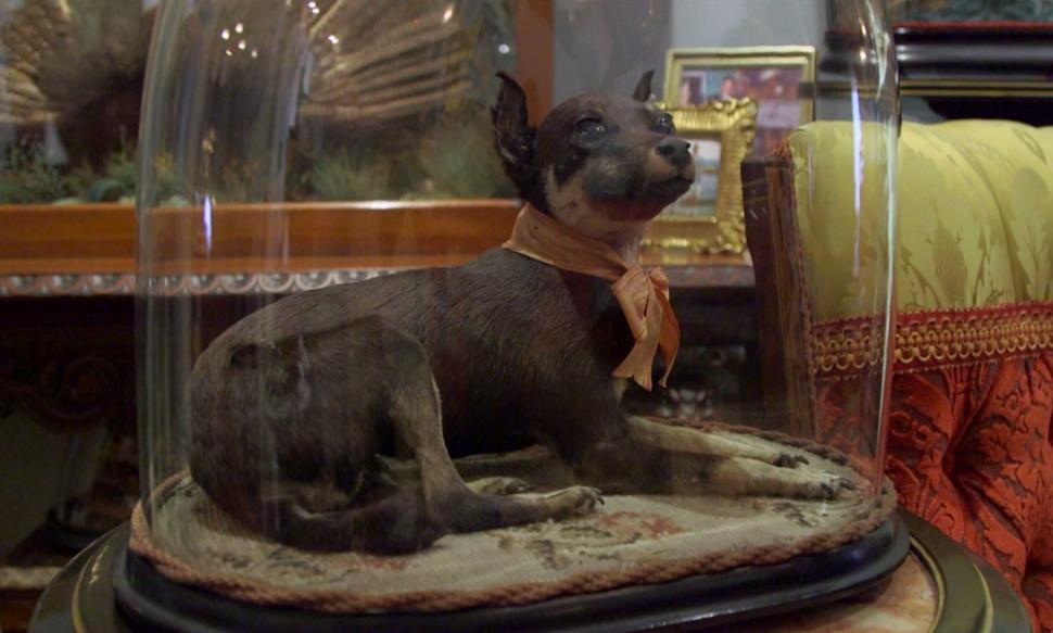 """Taxidermy dog """"Death and Taxidermy"""" video"""
