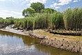 Technisch-biologische Ufersicherung an der Wümme, Versuchsstrecke 3 (50678788122).jpg