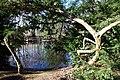 Teich im Heinrich Kleber Park.jpg