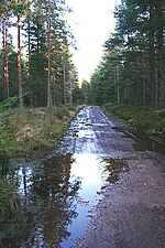 File:Teindland Forest - geograph.org.uk - 373829.jpg