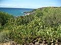 Teneriffa - Süd - La Galletas - Küstenwanderung nach Westen zum Leuchtturm von Punta Rasca - panoramio (9).jpg