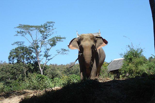640px-Thai_elephant.jpg