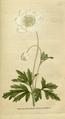 The Botanical Magazine, Plate 54 (Volume 2, 1788).png