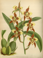 The Orchid Album-02-0015-0052.png