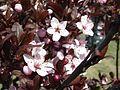 The Pink Flowers.jpg