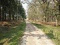 The Track in Amberwood Inclosure - geograph.org.uk - 414541.jpg