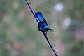 The blue bird.jpg