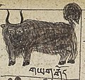 Tibet Yak art from Illustrations of Tibetan materia medica (cropped).jpg